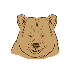 head bear animal free spirit symbol vector image