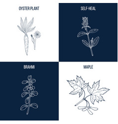 set of four hand drawn eatable and medicinal vector image