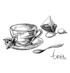 cup mint and tea bag vector image