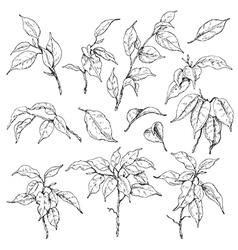 Doodle ficus set vector