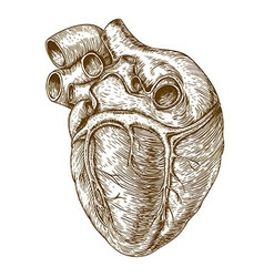 engraving heart vector image