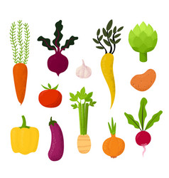 all kind vegetables beet tomato vector image