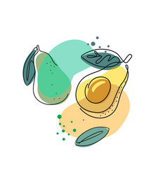 Avocado with leaves in outline vector