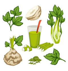 celery plant leaves and smoothie set organic vector image