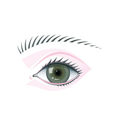 eye and eyebrow flat isolated vector image