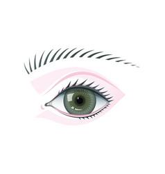 Eye and eyebrow flat isolated vector