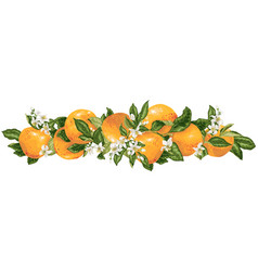 Headline decor elementwith grapefruit citrus vector