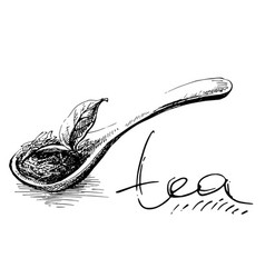 Wooden spoon with tea leaves vector