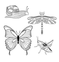 hand drawn insects set vector image