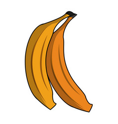 Bananas sweet fruit vector