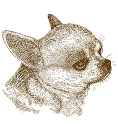 Engraving chihuahua head vector