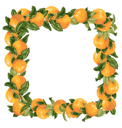 Grapefruit branches in a frame decoration vector