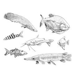sea and ocean types of fish hand drawn set vector image