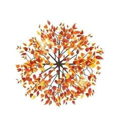 Autumn tree top view vector