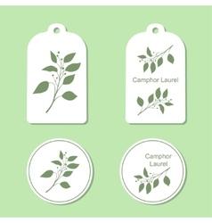 Camphor laurel branch vector