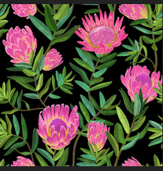 Floral seamless pattern with protea flowers vector