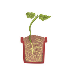 Green plant growing in a pot with ground soil vector