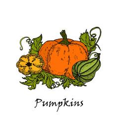 hand drawn of three colored pumpkins vector image