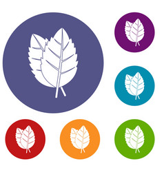 Two basil leaves icons set vector