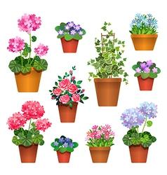 room flowers vs vector image