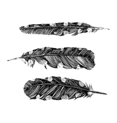 Hand drawn dotted feathers on white background vector image