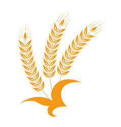 spikelets wheat or barley tied together vector image