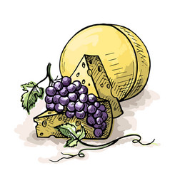 Watercolor bunch of grapes and cheese vector