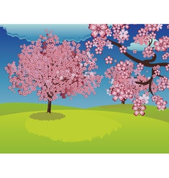 Blooming Sakura Tree on Lawn vector image vector image