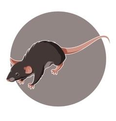 Isometric rat icon vector image