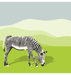Grazing zebra vector