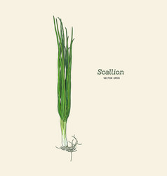 scallions vector image