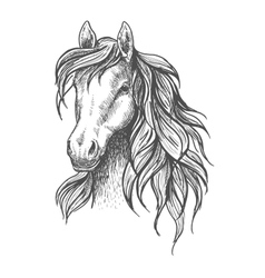Young horse head sketch with wavy mane vector