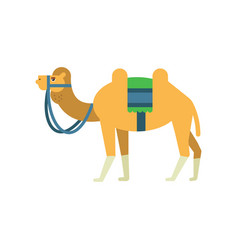 Arabian bactrian camel with colorful saddle vector