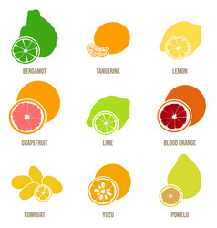 Citrus fruits flat set whole fruits and vector