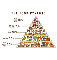 Healthy food plan pyramid infographics for vector