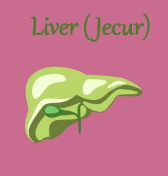 Human organ icon in flat style liver vector