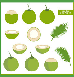 set of fresh young coconut in format and various vector image