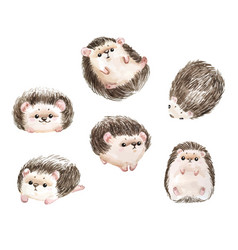 Adorable hedgehog white background with cute wate vector