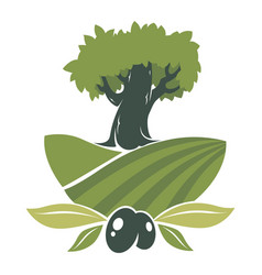 olives plantation label tree on field vector image