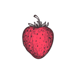 ripe strawberry hand drawn isolated icon vector image