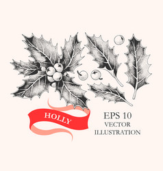 set of holly leaves and berries vector image