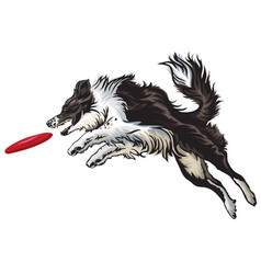Border collie playing frisbee vector