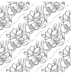 bouquet orchid flowers vector image