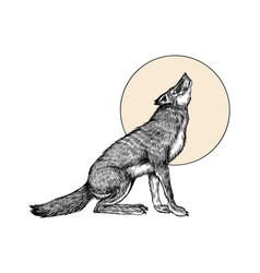gray wolf gray wolf a predatory beast and the vector image