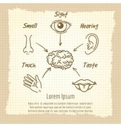 Human sense organs synopsis vintage poster vector