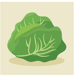 Lettuce fresh and healthy vegetable vector