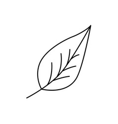 modern thin line icon of leaf premium quality vector image