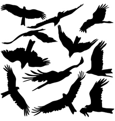 Set black silhouettes of prey eagles on white vector image