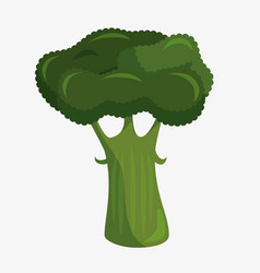Broccoli fresh and healthy vegetable vector