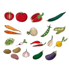 Different vegetables isolated on white vector